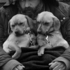 Grossman_lee_8man_with_puppies