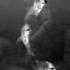 Grossman_lee_9in_the_aquarium__2
