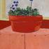 Flower10r