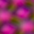 20101107221908-_mg_1252-2