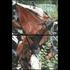 Rustedmetaldrape