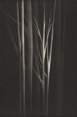 Forest Nocturne IV, Robert Kipniss