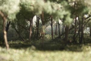 Forestdetail