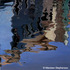 Burano_-_reflections_v_-_oil_on_canvas
