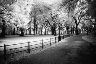 Pathway, Central Park, NY,