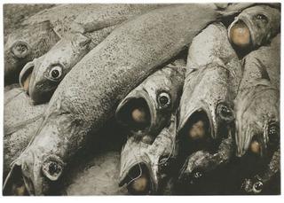 Fish Balls    , Karl Koenig