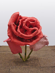 Untitled (Rose 31), Will Ryman