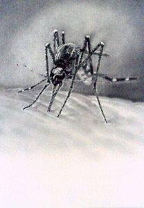 Untitled__mosquito__1
