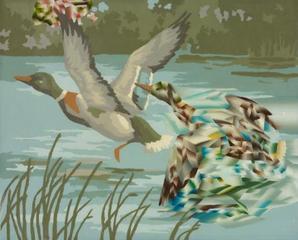 duck duck, Joseph Park
