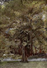 Ficus 2, Aziz + Cucher