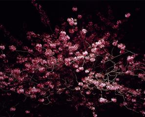 Night Flower No. 10, Gareth McConnell