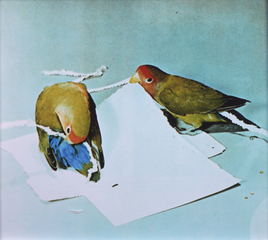 lovebirds, Emilie Halpern