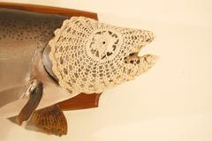 Fishcozy7
