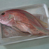 Chris_wright_red_snapper_2009