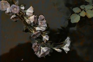 Acid Rain - Morning Glory, Hagit Cohen
