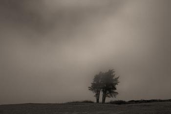 Tree_c-4801_31_8