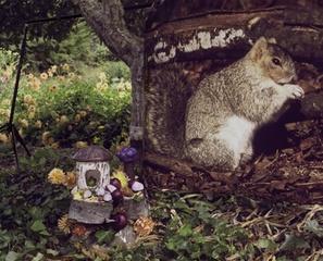 Fox Squirrel with Dahlias and Onions, Elizabeth Bryant