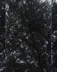 Untitled (Sheats-Goldstein House, #08) , Luisa Lambri
