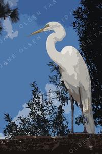 Egret1co_600