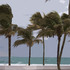 Windblownpalms_600