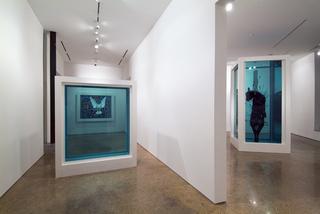 Installation Image, Damien Hirst