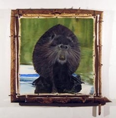 "Untitled (Beaver on Rock) (from the ""Beaver"" series),, Joshua Stern"