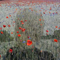 Beyond The View, Helen Sear