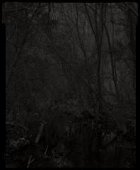 Santa Ynez Canyon #1, Brian Forrest