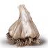 516arts_chin_garlic-web