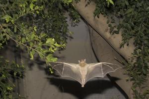 Bats__3_