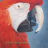 Red_macaw