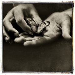 The_butterfly_effect