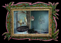 Bird_cage_at_olga_s_housema27488977-0005