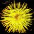 Web_yellow