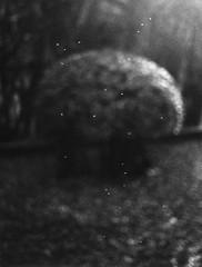 Untitled, Jochen Lempert