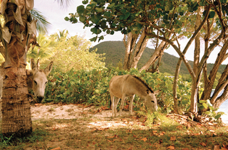 Donkey Studies no. 2, Nanna Debois Buhl