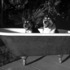 Two_dogs_in_a_tub