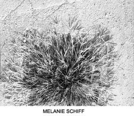 , Melanie Schiff