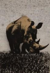 Rhino, Pino Pascali