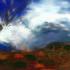 Australian__storm