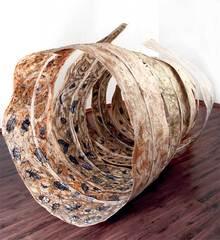 Cocoon, Jayashree Chakraborty