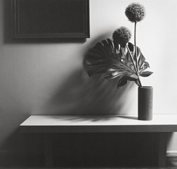 Flower, Robert Mapplethorpe