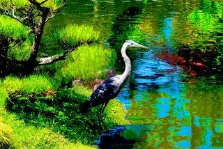 Japanese Garden, Kurt Weston