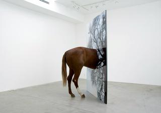 California Mission: Horse, Todd Gray