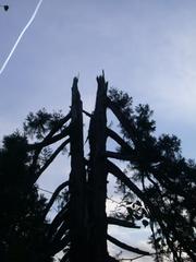 20100814062946-_arbre_fendu__b_atrice_darmagnac