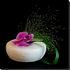 3644663-5-longing-orchid-phalaenopsis