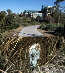 Hidden in Plain Sight: La Jolla/UTC Annex, Charles G. Miller