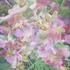 Floral_fantasy_4_40hx32w