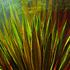 Succulents_38hx38w
