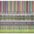 Fishmanb_barcode